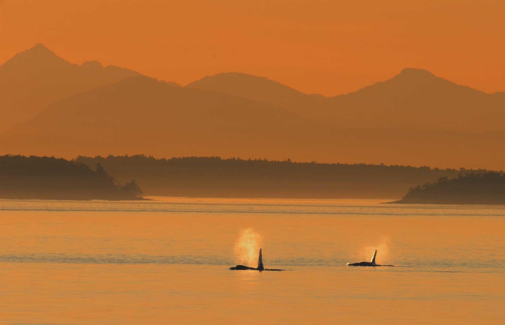 Orca Boat Tours
